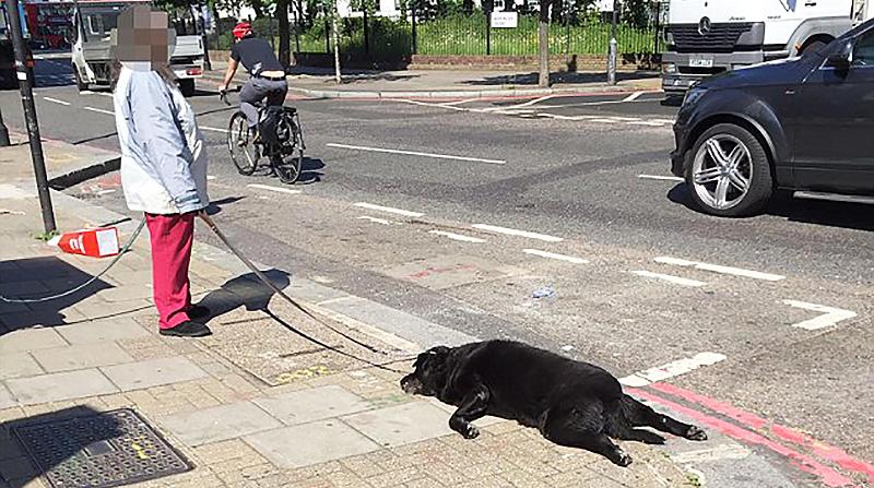 Новости: Мертвая собака на поводке
