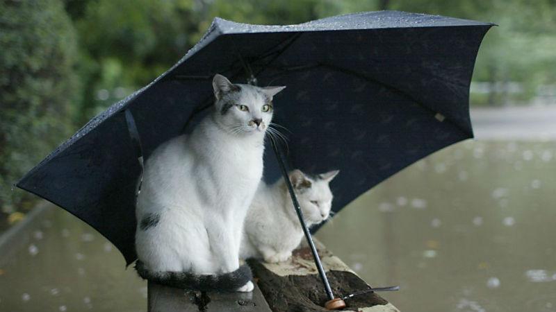 Новости: В Германию пришла осенняя погода