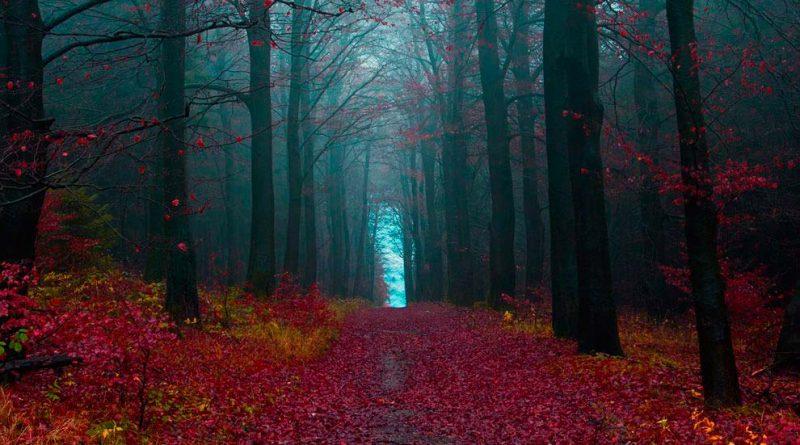 Галерея: Шварцвальд – Сказка Черного леса