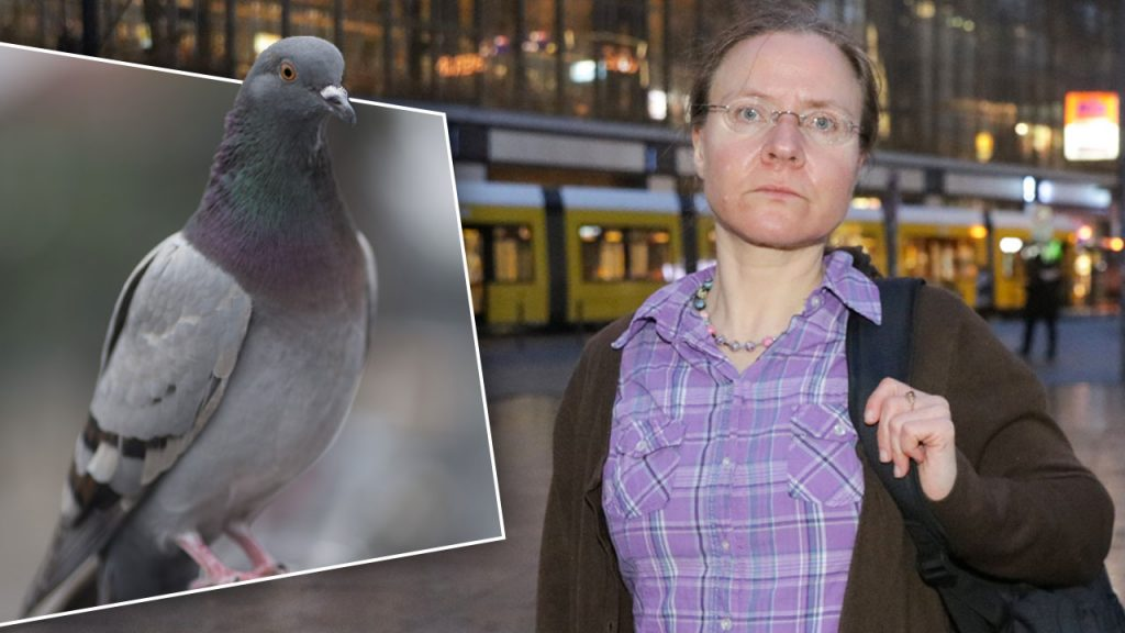 Общество: Жительницу Берлина оштрафовали за кормление голубей